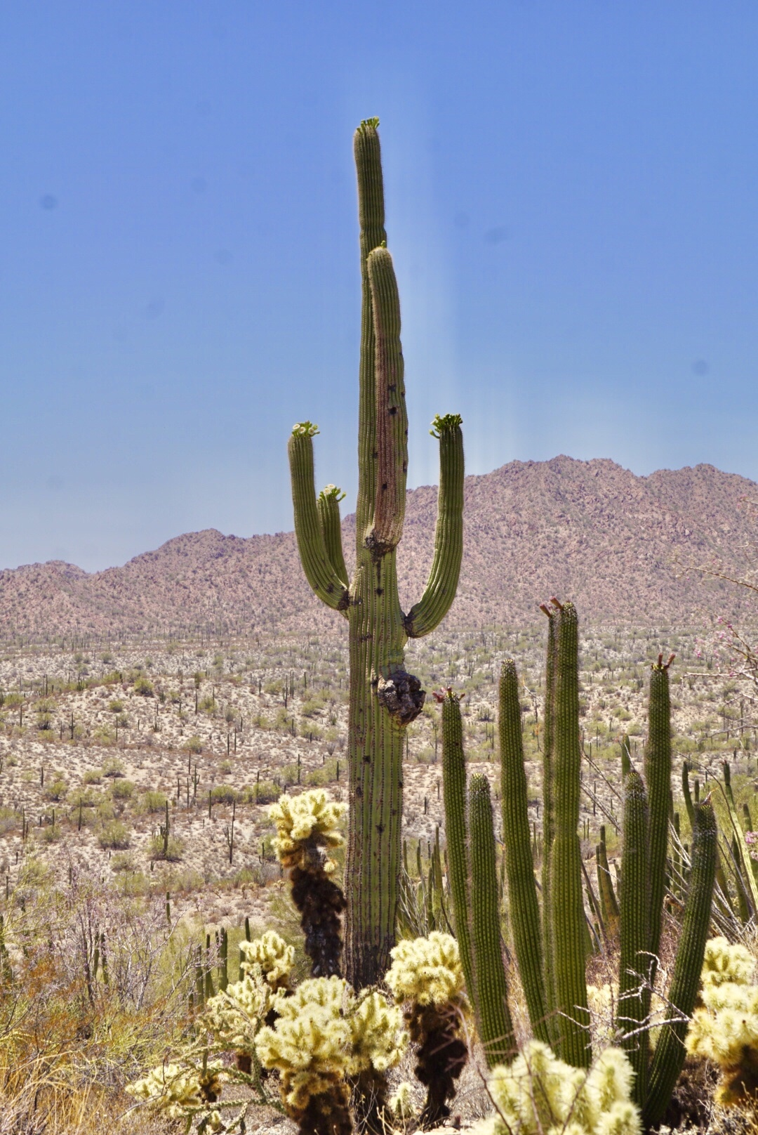 Organ Pipe National Park – A Desert Showcase